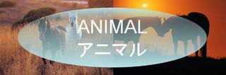 アニマル 画像.JPG